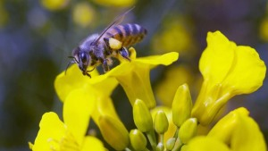 EU Neonicotinoid Ban Removes Vital Tools in Global Fight Against Pests