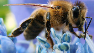 Honey Bees and Climate Change: A Hypothesis