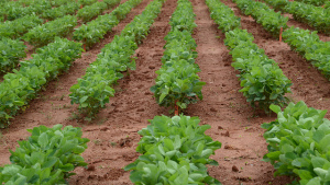 Harness the Soil to Feed Your Crop