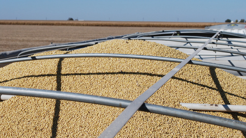 Report: Trade War Taking a Toll on Ag Economy