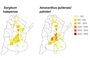 The above maps show the super-developed area being managed for resistance in sorghum and amaranthus species in 2014. The spread of area treated has been increasing rapidly since 2009.