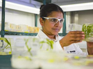 Reuters reports BASF will halve its plant biotechnology work force; photo credit: BASF SE