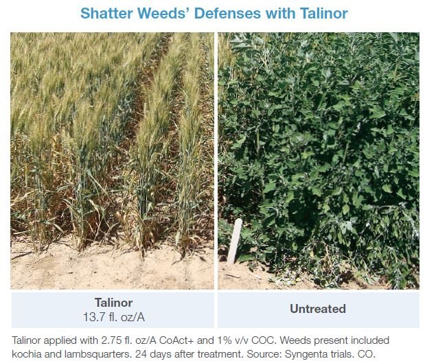 shatter-weeds-defenses-with-talinor-herbicide
