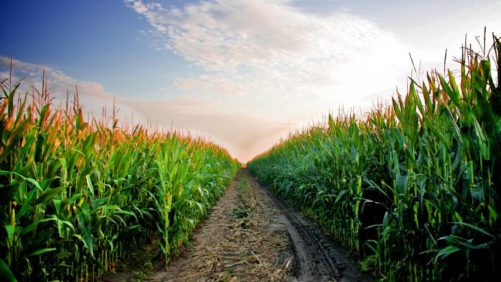Identifying Uncontested Market Spaces in the Global Crop Protection Industry (Part 3)