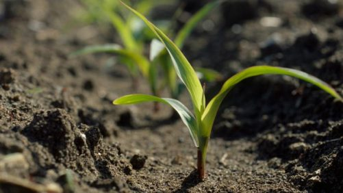 China's Vow to Review U.S. GMO Crops May Speed Seed Sales