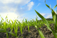 Bayer Enters Research Agreement in China to Improve Wheat Yields