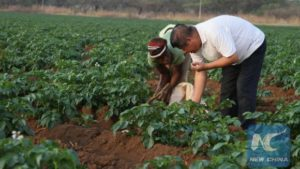 FAO: China's Presence in South-South Cooperation Transforming Africa's Agriculture