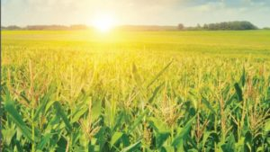 Pesticide Innovation Indicates Changing Industry
