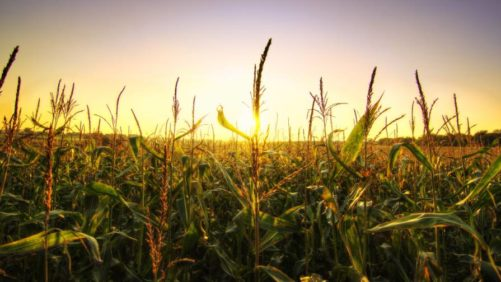 As Technology Improves, Crop Protection Continues to Face Challenges