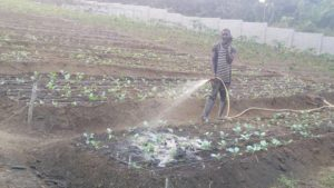 African-Smallholder-Farmers