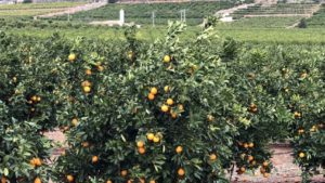 Slideshow: Crop Protection, Plant Health Companies Highlight Tour of Spain and Italy