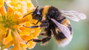 Bayer: Enzymes in Honeybees Determine Neonic Sensitivity