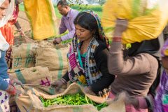 Bayer in New Alliance to Provide Solutions for Smallholders