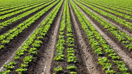 Opinion: The Nuances of Crop Nutrition