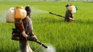 PMFAI: Foreign Companies Must Stop Importing Pesticides without Registering