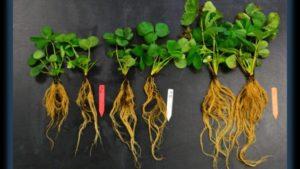 Biostimulants Gaining Ground