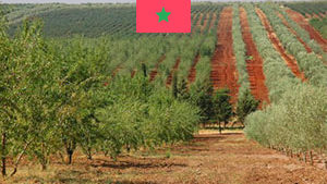 Staphyt Opens Experimental Station in Morocco