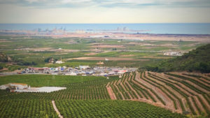 The Crop Protection Product and Plant Health Markets of Italy and Spain