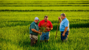 BASF Releases Provisia Rice System for 2018 Season