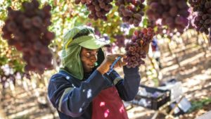 Seeking Stability in South American Agriculture