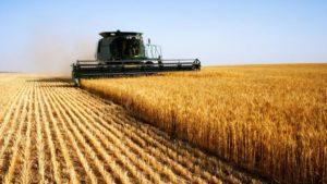 Field-Wheat-Combine