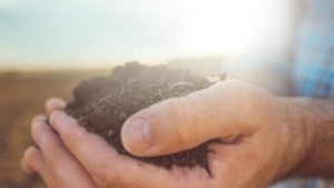 Are You Using Your Soil to Its Full Potential?