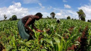 Kenya's Crop Protection Industry Fears 'Dire Consequences' of New Pesticides Tax