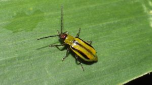 Insecticides 2019: New Pest and Product Watch