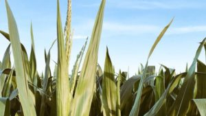 5 Ways Biostimulants are Impacting the Crop Protection Market