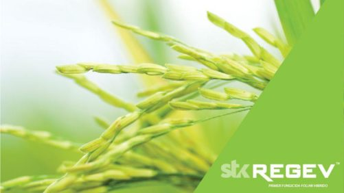 STK REGEV 'Hybrid' Fungicide Registered in the Philippines
